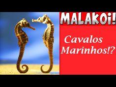 Cavalos Marinhos Malakois! #Célio Azevedo