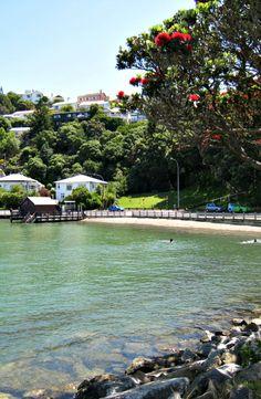 Haitaitai Beach, Wellington - a summer scene, with a sheltered bay and pohutukawa tree in bloom, NZ