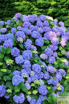 Planting a hydrangea: how to do it? Diy Wooden Planters, Recycled Planters, Large Outdoor Planters, Deck Planters, Macrame Hanging Planter, Flower Planters, Indoor Planters, Tree Stump Planter, Succulent Wall Planter