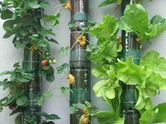 Vamos fazer uma horta com garrafa pet? - Reciclagem e Sucata