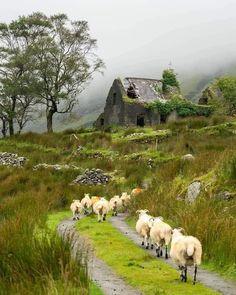 Places To Travel, Places To Go, Best Of Ireland, Irish Cottage, England And Scotland, Skye Scotland, English Countryside, Ireland Travel, Sheep