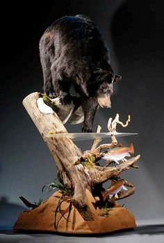 nice bear Taxidermy Decor, Taxidermy Display, Bird Taxidermy, Funny Taxidermy, Bear Mounts, Fish Mounts, Bobcat Mounts, Wildlife Decor, Wildlife Art