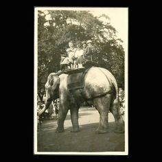 Elephant Ride Vintage Postcard by JMCVintagecards on Etsy                  I remember  riding on Rosie the elephant at Bristol Zoo (UK) when a child.