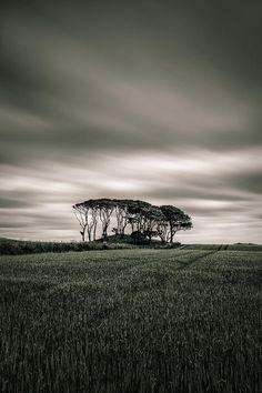 Crawton Copse by Dave Bowman