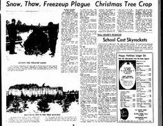 Snow, Thaw, Freezup Plague Christmas Tree Crop (Ottawa) 1965