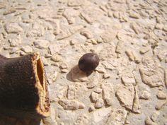 Detalhe da semente que vem dentro do fruto.