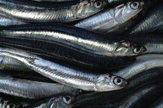 """SLOW FISH CILENTO ALICI  """"Le Castagnelle"""" produce e vende nella sua fattoria non lontana dalla casa FRUTTA, VERDURA, CACIORICOTTA, OLIO EXTRAVERGINE DI OLIVA, VINO ROSSO e altri prodotti rigorosamente biologici."""