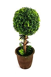 This realistic mini lollipop tree is planted in a ceramic pot and stands tall. Looks great on the veranda or on a side table in your home.<BR><BR><b cm