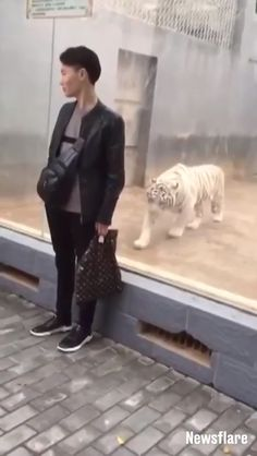Video Tiger goes for a sneak attack Funny Animal Videos, Cute Funny Animals, Funny Animal Pictures, Cute Baby Animals, Animal Memes, Funny Cute, Animals And Pets, Cute Cats, Animal Attack
