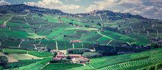 Wines, City Photo, Italia