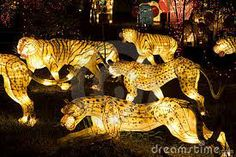 Photo about Image of lighted up tiger and leopard lanterns. Image of lamp, animals, glow - 3711716 Tissue Paper Lanterns, Carnival Floats, Festival Lights, Lantern Festival, Light Fest, Lantern Designs, Peacock Art, Digital Fabrication, Steampunk Lamp