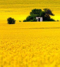 vibrant citrine    by Evgeni Dinev via vurtual tumblr