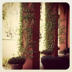 Estancia La Felisa, Hernando, Córdoba, Argentina Spaces, Plants, Cordoba, Argentina, Plant, Planting, Planets