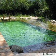 The Natural Pool Swimming Pool Pond, Natural Swimming Ponds, Natural Pond, Casas Containers, Pool Maintenance, Dream Pools, Garden Pool, Backyard Pools, Pool Decks