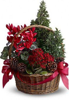 "Tannenbaum Basket of plants and juniper ""trees"""