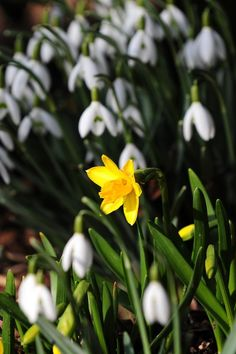 Gallery: Spring weather 4th March 2013   Metro UK