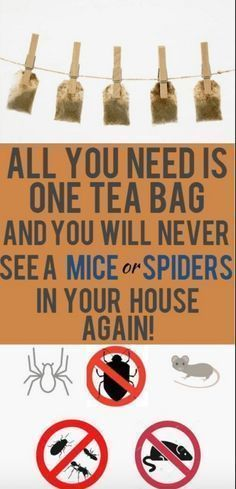 Unbelievable! One Tea Bag And You Will Never See A Mice Or Spiders In Your House Again! (Works great) – Toned Chick #pestcontroldiyspiders