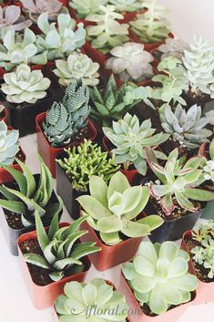 Get your floral projects started, choose from cute rosette succulents or trendy mini cactus these plants are hardy and easy to grow. Fake Flowers, Silk Flowers, Dried Flowers, Fake Plants, Artificial Plants, Creative Wedding Favors, Mini Cactus, Plants Are Friends, Faux Succulents
