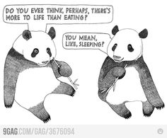 Funny pictures about The Life Of A Panda. Oh, and cool pics about The Life Of A Panda. Also, The Life Of A Panda photos. Funny Shit, The Funny, Funny Stuff, Funny Things, Random Stuff, Hipster Things, Random Humor, Panda Triste, Story Of My Life