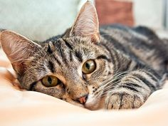 If your cat escapes outside and becomes lost, there are steps to take to help ensure she comes home. Learn about what to do to help find your cat.