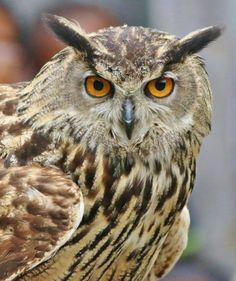 Owl portrait by Paul Wyman on 500px