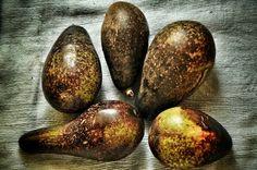 African avocado II