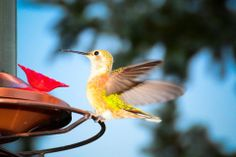 We've had a family of Hummingbirds move in! What should we name this one?