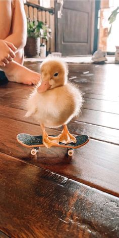 my duck is cooler than yours😎 Baby Animals Super Cute, Cute Little Animals, Cute Funny Animals, Funny Owls, Baby Animals Pictures, Cute Animal Pictures, Baby Pictures, Cute Ducklings, Animal Wallpaper