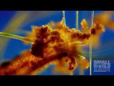 Nikon Small World in Motion 2016 - Neatorama