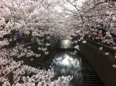 Naka Meguro, Tokyo, April 2012 Cherry Blossom, Tokyo, Real Estate, Japan, Outdoor, Outdoors, Tokyo Japan, Real Estates, Outdoor Games