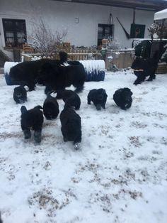 für die Neufis vom Doolittlehof Snow, Outdoor, Puppys, Pet Dogs, Outdoors, Outdoor Games, The Great Outdoors, Eyes, Let It Snow