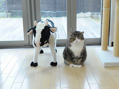 Maru and The Cow