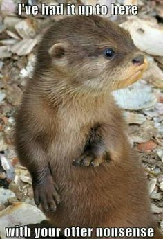 I freak in love Otters :)