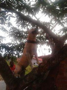 Blog do Luiz : Cachorro Trepador veja as fotos