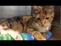 LILLY – A1078903 | NYC AC&C Urgent Cats