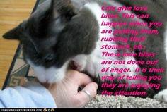 Fun Cat Facts #82