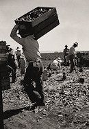 """Carrot pullers from Texas, Oklahoma, Arkansas, Missouri and Mexico. Coachella Valley, California. """"We come from all states and we can't make a dollar a day in this field noways. Working from seven in the morning till twelve noon we earn an average of thirty five cents."""""""