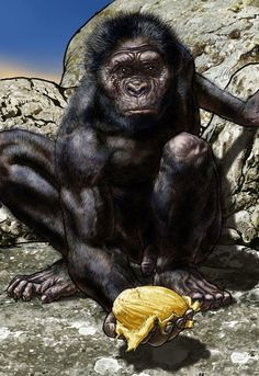 """Australopithecus afarensis - """"Lucy - L'espoir"""" - P. Norbert"""
