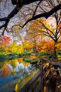 Japanese Gardens Pond by dfikar1, via Flickr