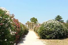 #Metaponto, dove la #Grecia è diventata #Grande