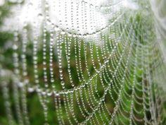 Amazing creatures spiders are!