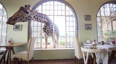 Group Size: Based on Minimum 2 passengers Departs: Daily .................................................. The Giraffe Manor is an elegant, privately owned and personally hosted, small and exclusive hotel, famous for its resident herd of giraffe. The Giraffe Manor offers a rich blend of welcoming accommodation, highly trained and friendly staff, as well as one of Nairobi's finest kitchens. This is the only place in the world where guests can enjoy the experience of feeding giraffe over the…
