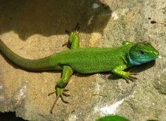 Creatures, Photo And Video, Animals, Gardens, Colorful, Google, Photos, Animales, Pictures