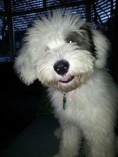 Puppy Maisie