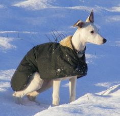 Water resistant and wind proof, these Whippet coats are made from tough, dark green waxed cotton with a warm faux fur lining and a hood for when the weather's bad. Lets face it that's quiet often here in England!  The adjustable stud fastening on the belt and at the front allow for a perfect fit.They are ideal for wet muddy walks, country living and minimising the volume of wet doggy water brought back into the house.    The coats are cut with a nicely curved back and fit whippets and…