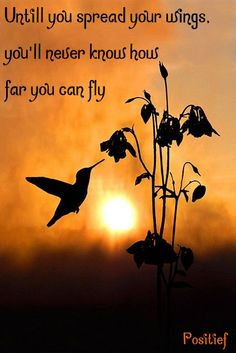 Spread your wings - fly - give it a try - quotes - saying - birds