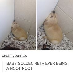 NOOT NOOT. My Bonny used to sleep like this ALL the time...