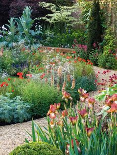 unusually colored iris matched with apricot foxgloves, and verbascum.  Light and airy amni majus, stridently orange poppies.  Nice cardoon.