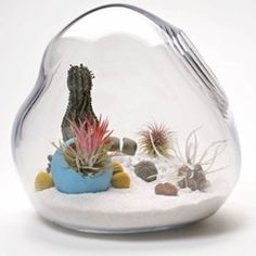 Check out these terrific terrariums.
