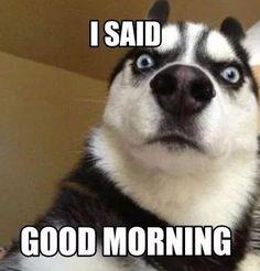 Funny Good Morning Images, Good Morning Photos, Good Morning Gif, Saturday Morning, Morning Kisses, Funny Saturday Memes, Monday Memes, Funny Morning Memes, Morning Cartoon